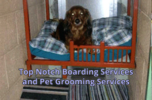 boarding-grooming-services