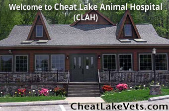 Welcome to Cheat Lake Animal Hospital