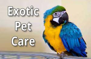 Exotic Pet Care at CLAH