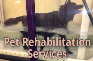 Pet Rehabilitation Services