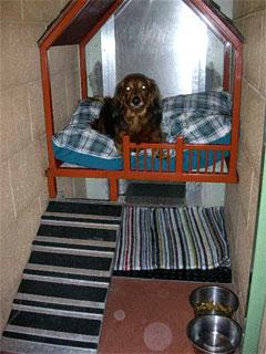 Small indoor dog run