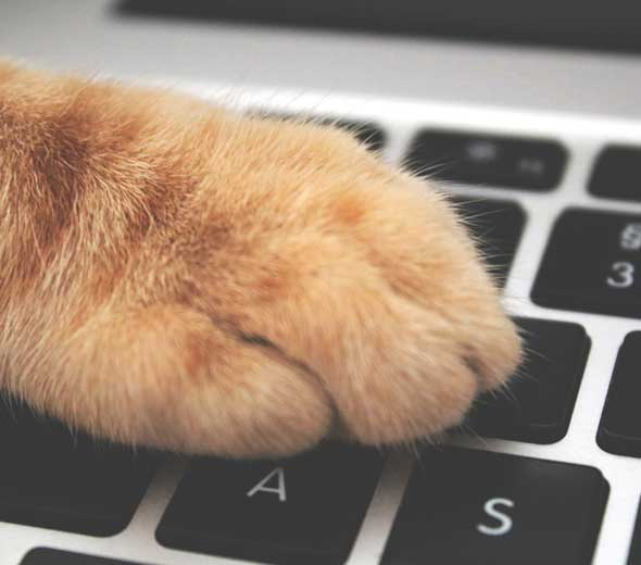 Cat paw on computer keyboard