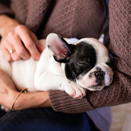 Puppy asleep in woman's arms