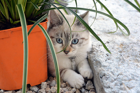 Kitten hiding behind a houseplant