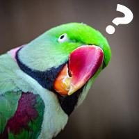 Questioning bird