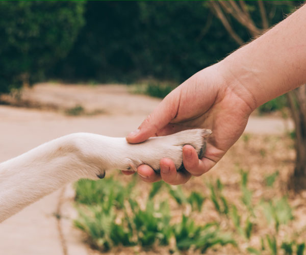 Human hand holding a dog's paw